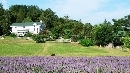Overlay_Bluebird-Hill-Farm.jpg